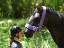 Photo de Beauty-Schleich