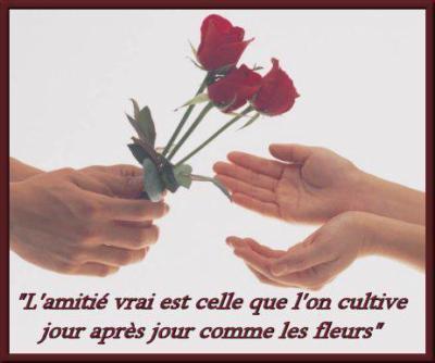 L Amitie Se Cultive Comme Une Fleur Mon Coin De Poesie