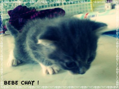 Mes chats ! <3