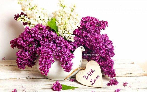 beaux weekend a toutes et tous mes amies et amis bisous