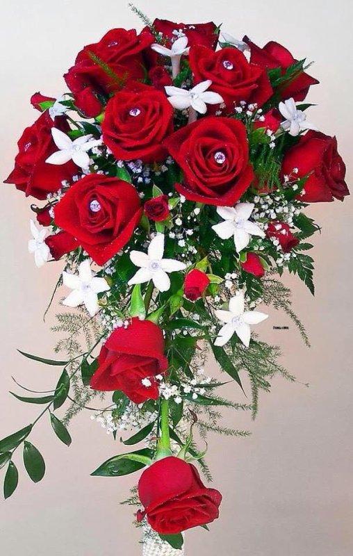 *~*~*La rose et ses épines*~*~*