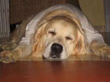 *~*~* Sixième sens*~*~*  Histoire vécue Tout le monde lui disait de faire piquer son chien : il était vieux, malade, bizarre...