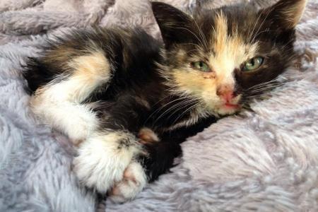 Honteux: le petit chat a été jeté par la fenêtre de la voiture