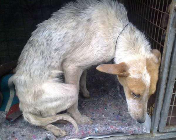Enterrée vivante car elle dérangeait, cette chienne errante est devenu une source d'inspiration.
