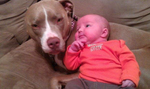 Il craignait qu'un pitbull fasse du mal à son bébé. Et voilà ce qui s'est passé.