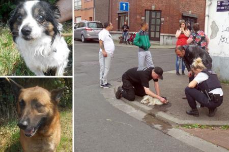 Dampremy: un chien ligoté abandonné dans un champ