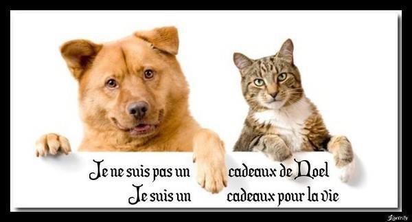 Stop à l'abandon des animaux! Belgique