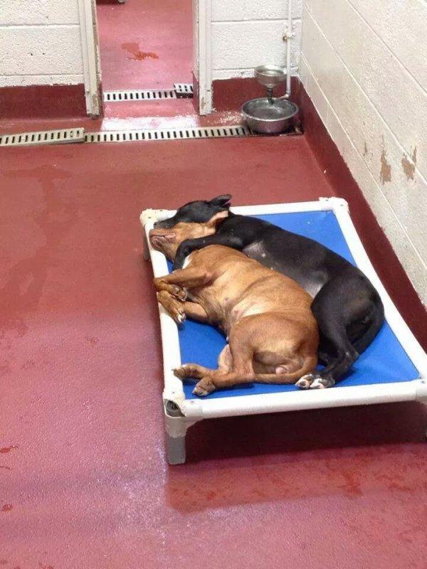 Dans un refuge, une chienne sauve son amie de l'euthanasie après qu'une photo de leur étreinte soit devenue virale.