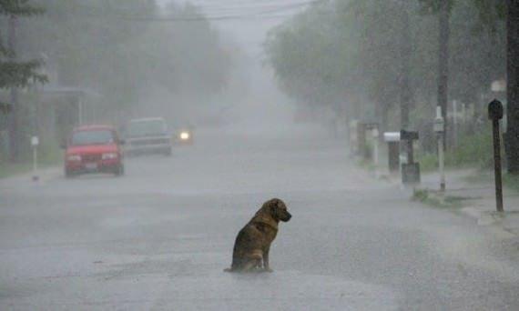 L'ultime prière d'un chien qui devrait vous émouvoir jusqu'aux larmes.