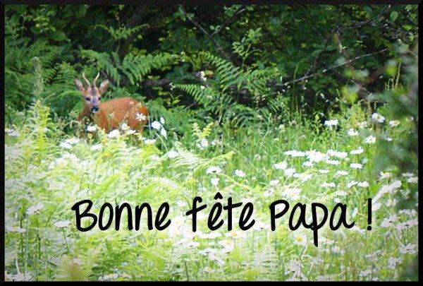bonne fête a tous les papas de Belgique et du monde