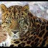 tigressedu93