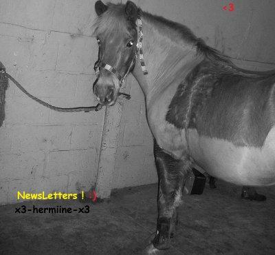 NewsLetter & Blog coup de coeur !
