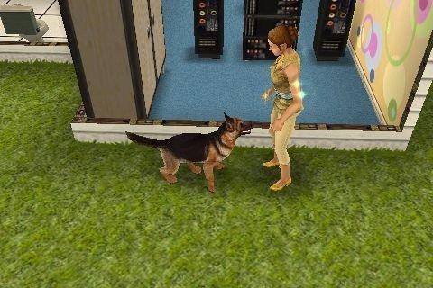"""Notre futur chien """"Sam"""""""