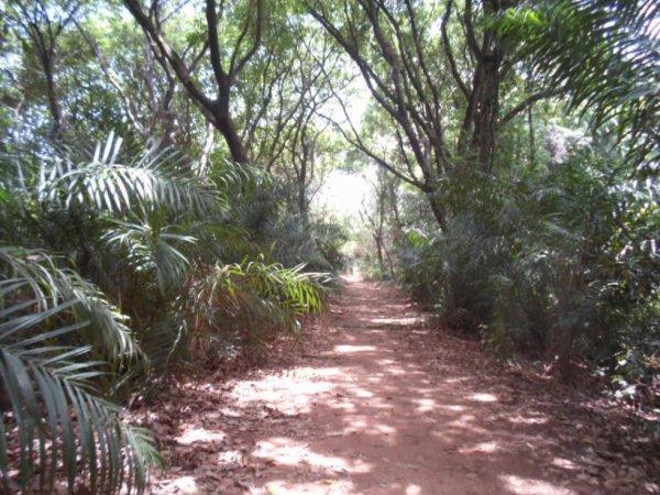 Forêt classée du Kou