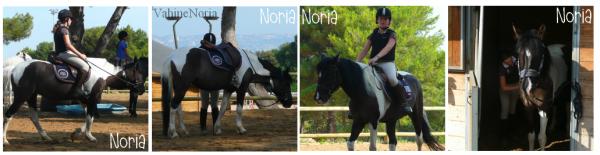 Noria, plus qu'une simple ponette ♥.