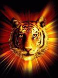 Photo de 7-tiger-7