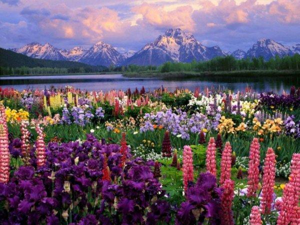 Paysage Magnifique Montagne Et Toute Sorte De Fleurs Anges Et Fleurs