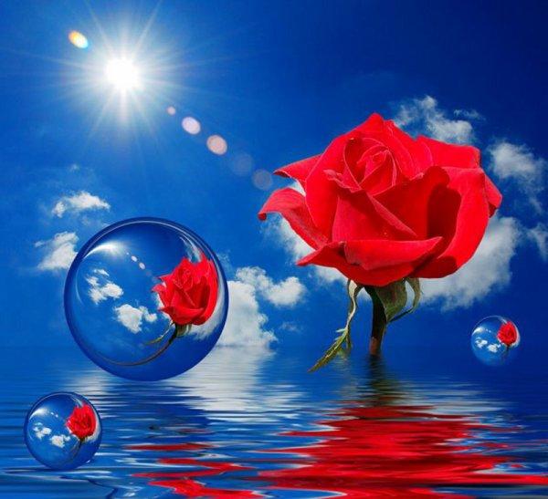 Magnifique Montage Rose Rouge Et Bulle Et Eau Anges Et Fleurs