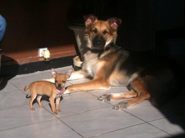 Princesse ilona , Sa copine Lola , et sa soeur Tania !