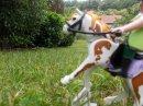 Photo de Horsy-jumping-playmo