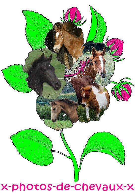 Foals's flower