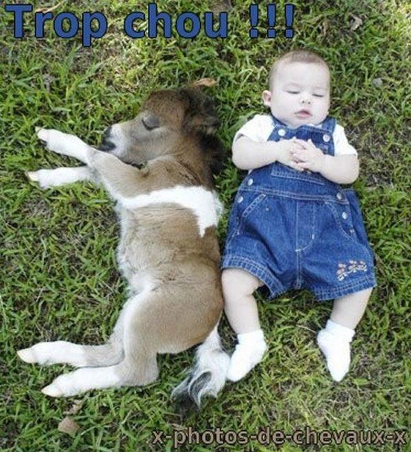 Bébé + poulain = trop mignon !!!