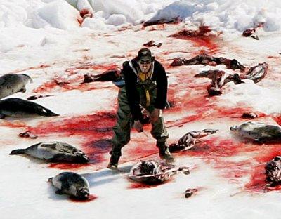7. Qui est contre la chasse au phoque?