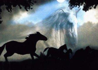 chevaux passion de ma life....