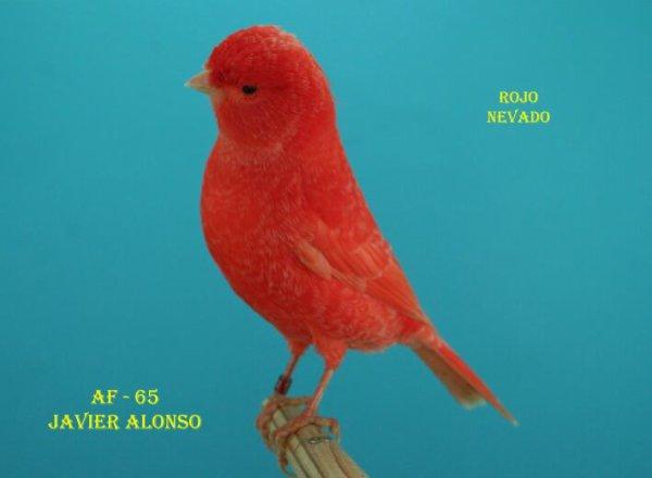 ROJO NEVADO 2012