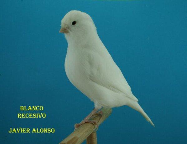 ALGUNOS BLANCOS 2012