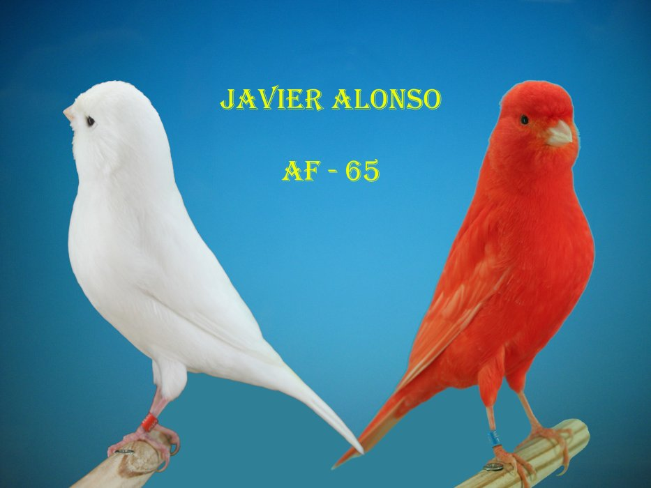 Blog de Javier Alonso Fernandez