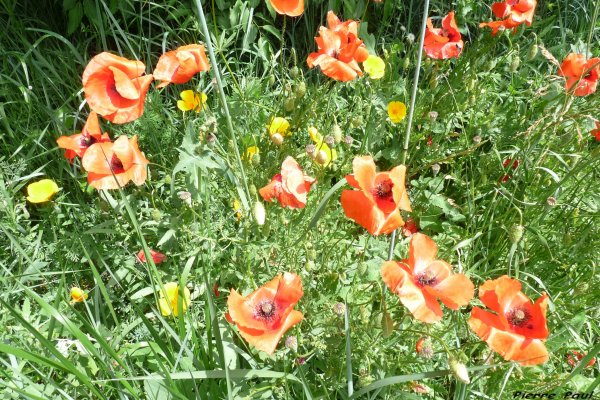La nature est  toujours d'une éclatante beauté en Provence