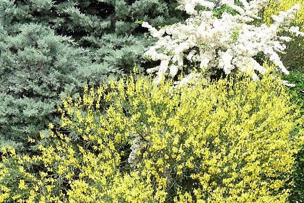 Encore 2 mois et demi pour trouver la  végétation aussi fleurie ( photo Pierre Paul )
