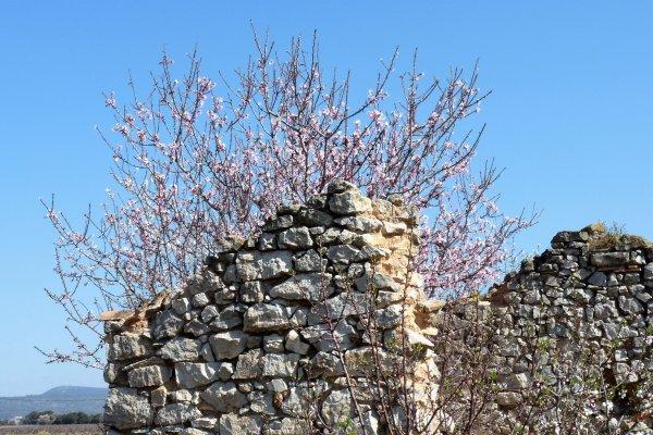 Le printemps est bien là en Provence (photos Pierre Paul )