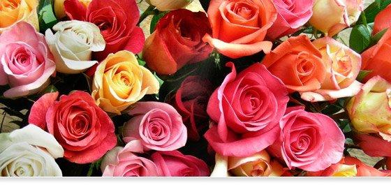 La vente de fleurs en ligne, une activité en pleine croissance