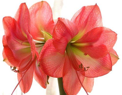 Les fleurs, offrant une humeur gaie