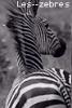 Les--Zebres