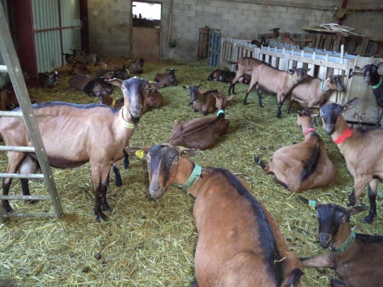 Photos à la ferme Roudol