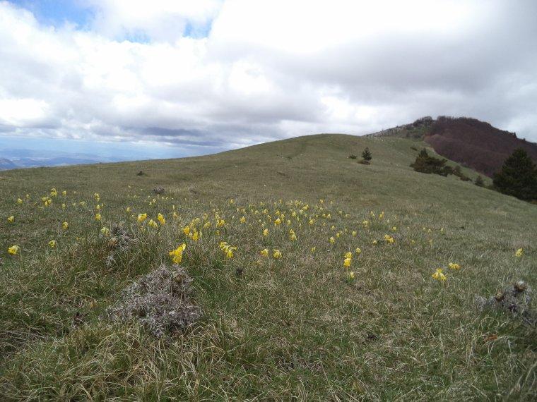 Grande traversé de la montagne de Couspeau (1544 mètres) avec Aurélien, photos (4)