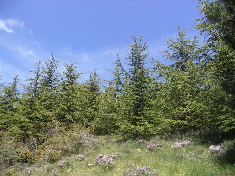 Ascension montagne de la Lance (1340m) avec Aurélien et David (7)