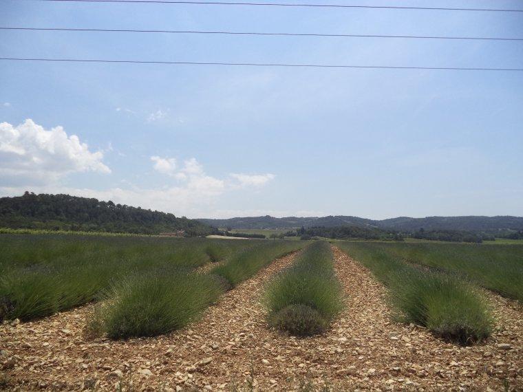 Balade à VTT entre vignes, vergers et forêt