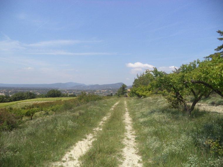 Balade à VTT entre vignes, vergers et forêt (2)