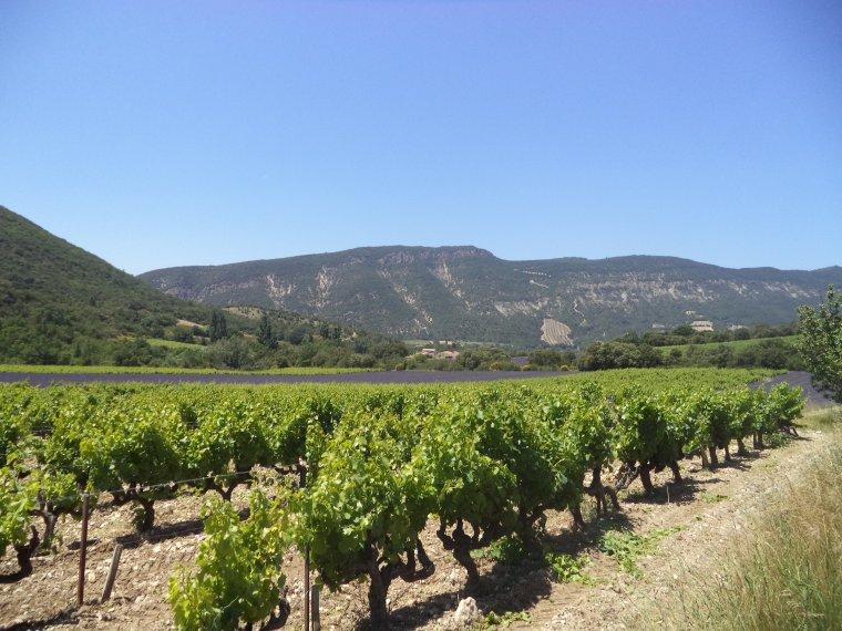 2e journée de travail au domaine de serre des vignes + vélo + randonnée !!!  photos (2)