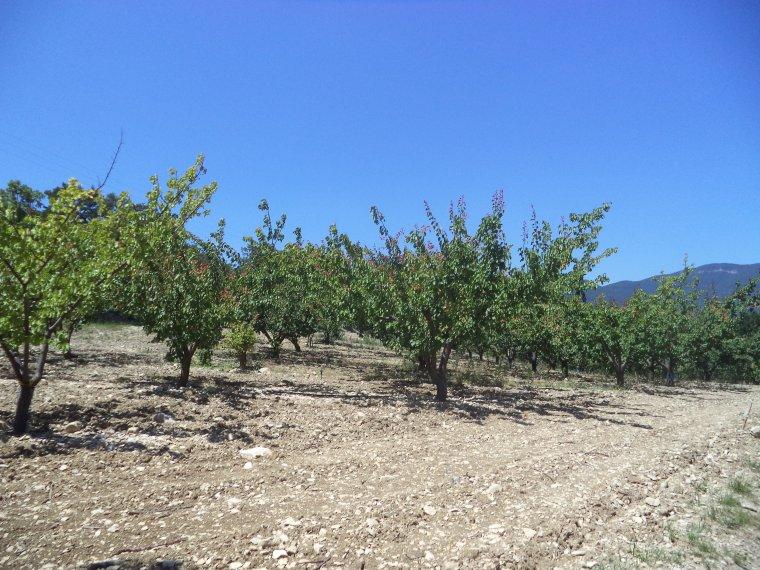 2e journée de travail au domaine de serre des vignes + vélo + randonnée !!!  photos (3)