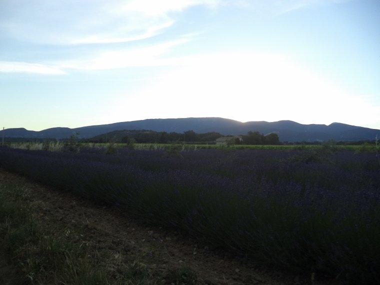 3e journée de travail au domaine de serre des vignes + vélo