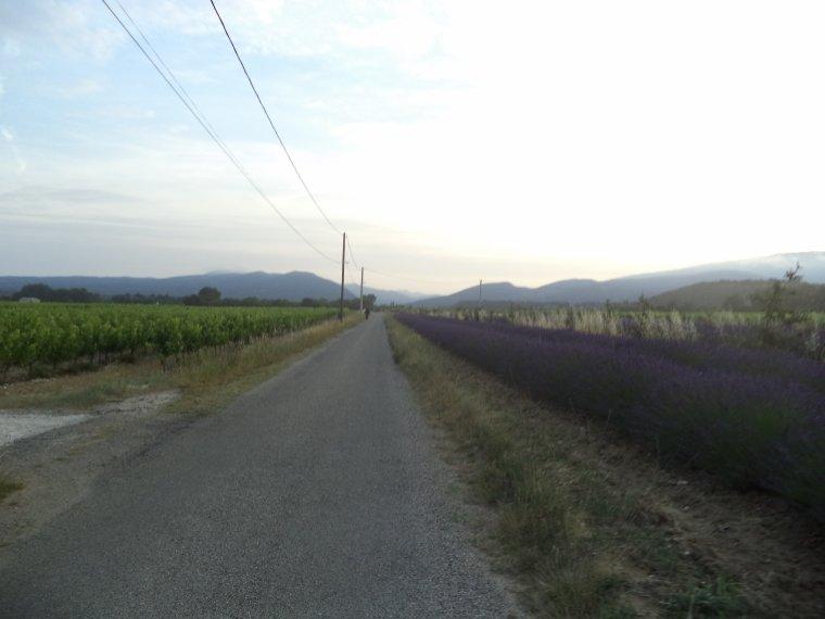 5e journée de travail au domaine de serre des vignes + vélo
