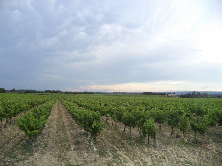 6e journée de travail au domaine de serre des vignes + vélo