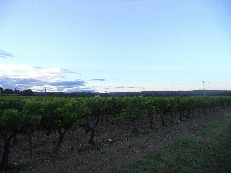 17e journée de travail au domaine du serre des Vignes