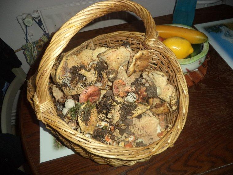 Récolte de champignons, et 5kg !