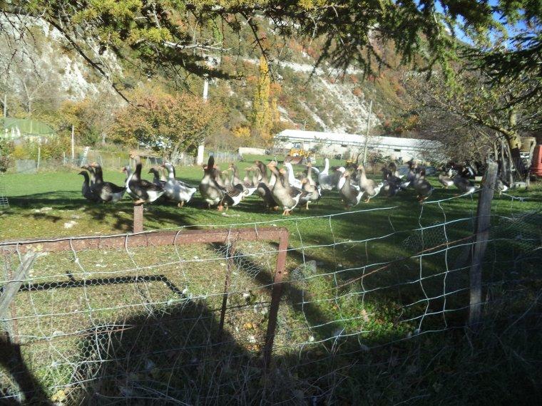 Grande randonnée à VTT en Drome Provençale, +2 cols (photos 4)